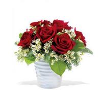 Soft Roses, Canada