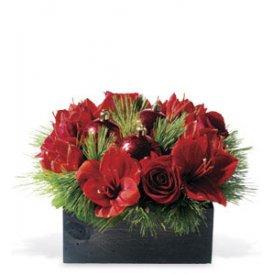 Red Amaryllis, Canada