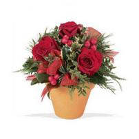 Terra-cotta Roses, Canada