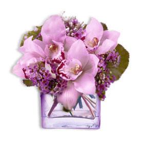 Premium Orchid Cube
