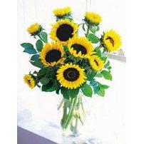 Sunflowers, Canada