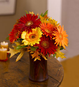 Seasonal Gerberas