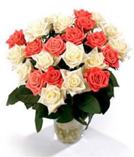 Canadian Premium Roses