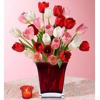 Passionate Tulips - Canada