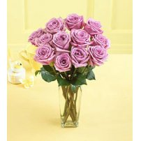 Lavender Roses, Canada